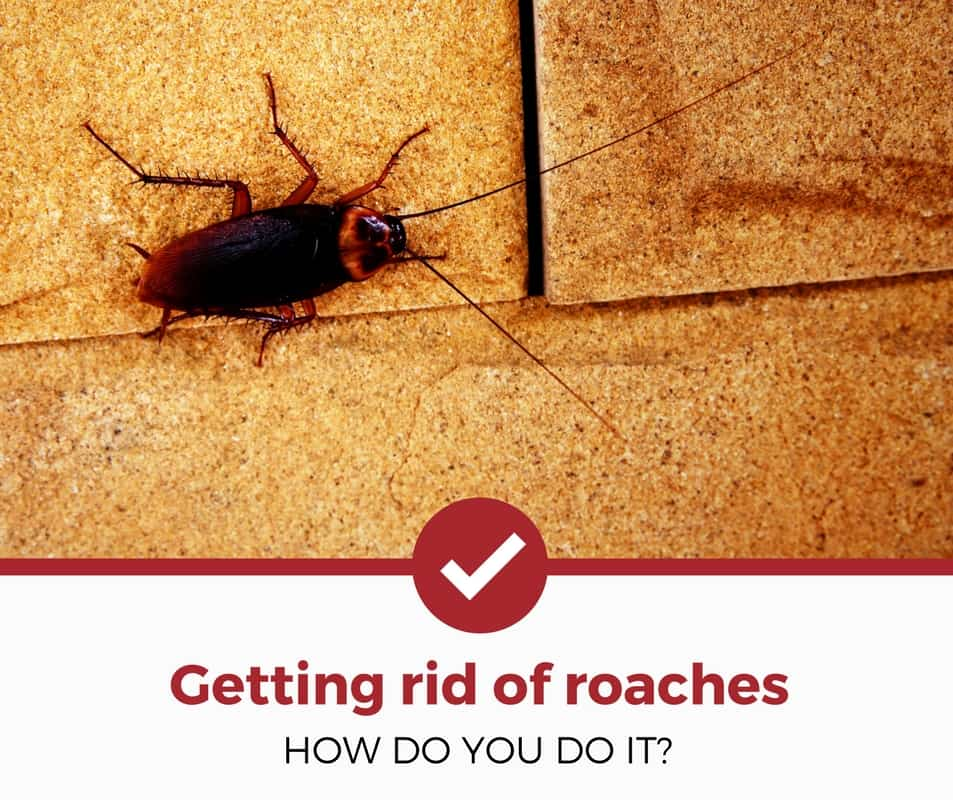 How to Get Rid of Cockroaches, how to get rid of cockroaches in the bathroom, how to get rid of cockroaches completely, how to get rid of cockroaches in the kitchen, how to get rid of cockroaches from the house, how to get rid of cockroaches in kitchen cabinets, how to get rid of cockroaches at home, how to get rid of cockroaches using borax, how to get rid of cockroaches naturally, how to get rid of cockroaches and rats, how to get rid of cockroaches animal crossing, how to get rid of cockroaches acnh, how to get rid of cockroaches animal crossing new horizons, how to get rid of cockroaches animal crossing new leaf, how to get rid of cockroaches animal crossing wild world, how to get rid of cockroaches at kitchen, how to get rid of cockroaches boric acid, how to get rid of cockroaches bunnings, how to get rid of cockroaches baby safe, how to get rid of cockroaches bedroom, how to get rid of cockroaches baking soda, how to get rid of cockroaches bites, how to get rid of cockroaches bathroom, how to get rid of cockroaches before moving,
